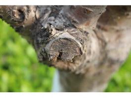 Branch saw notch texture