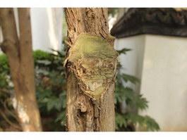 Sawn off branch texture