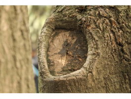 Deep hollow on the tree texture