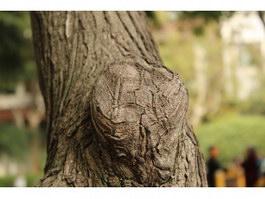 Tree wart texture
