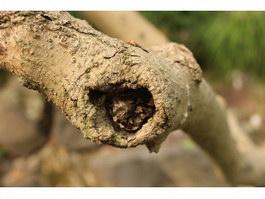 Wormhole on the tree texture