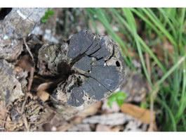 Dead tree decomposed texture