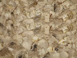 White Petrifide Wood Gem texture