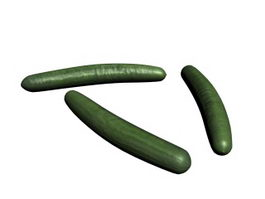 Cetriolo Cucumber 3d model