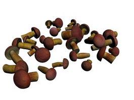 Edible Boletus Mushroom 3d model