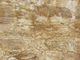 Golden Forest Quartzite texture