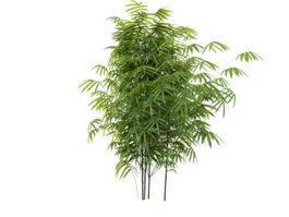 Bambusoideae Bamboo 3d model