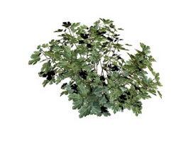 Small shrub 3d model