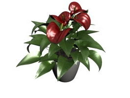 Potted Anthurium 3d model