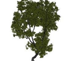 Vegeta elm tree 3d model