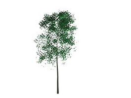 Tree and leaf 3d model