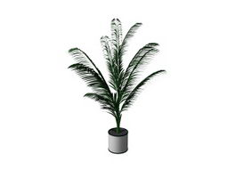 Potted plant cycas 3d model