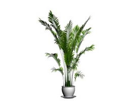 Potted madagascar palm 3d model