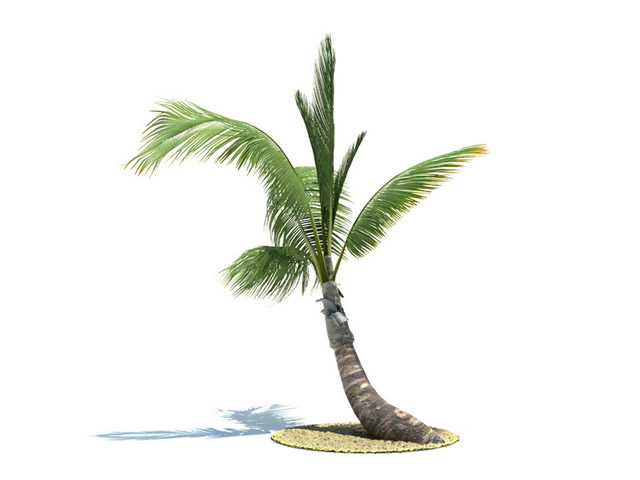 Tall Palm Tree 3d Model 3dsMax Files Free Download