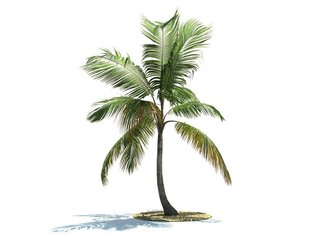 3Ds Max Coconut Tree Model Free Download - gaurani