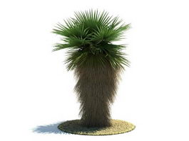 Washingtonia robusta tree 3d model