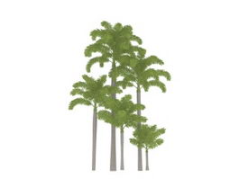 Tropical plants palm trees 3d model