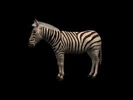 Chapman's zebra 3d model