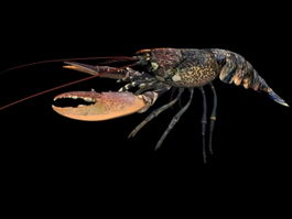European lobster 3d model