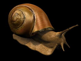 Land snail 3d model