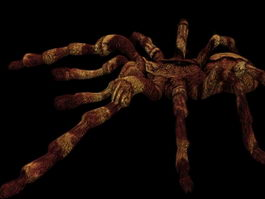 Tarantula spider 3d model