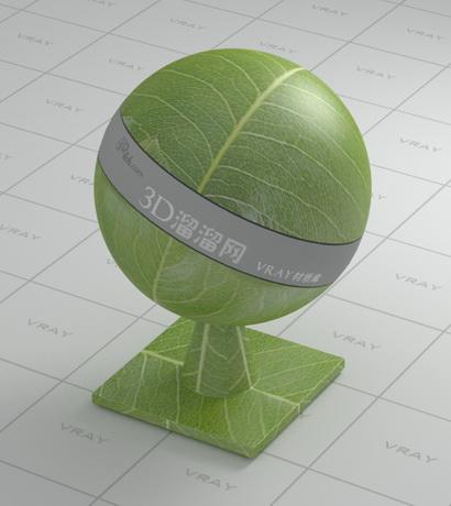Pear Leaf Vray Material Cadnav Com