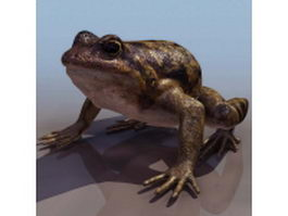 European spadefoot toad 3d model