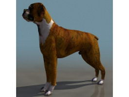 Fawn boxer dog 3d model