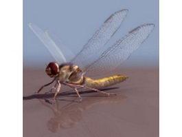 Anaciaeschna jaspidea dragonfly 3d model