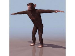 Common chimpanzee 3d model