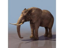 African forest elephant 3d model