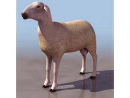 Female sheep(ewe) 3d model