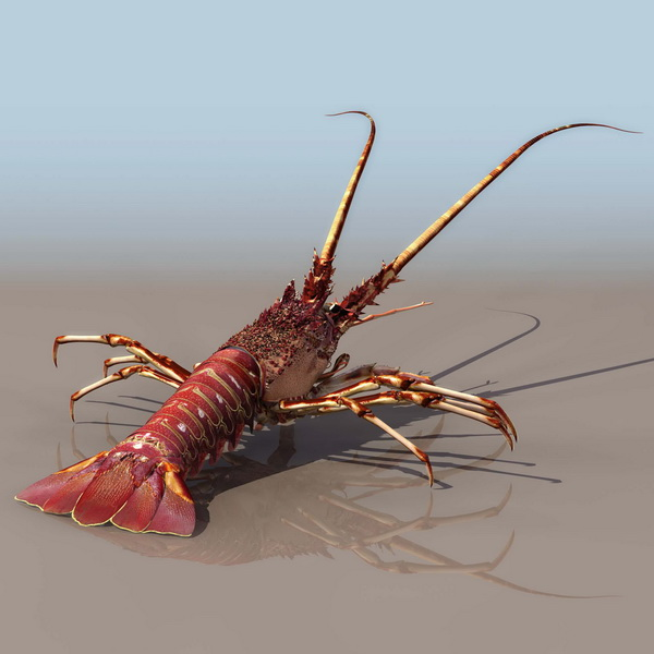 Clawed lobster 3d model