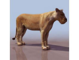 Female lion (lioness) 3d model