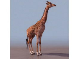 West African giraffe 3d model