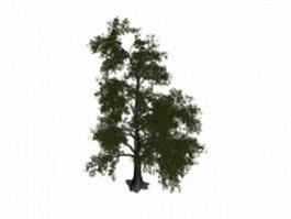 Tilia tomentosa tree 3d model