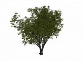Grey willow tree 3d model