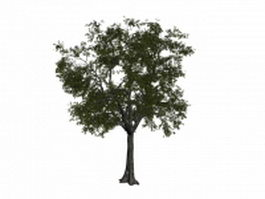 American linden tree 3d model