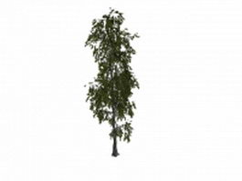 White poplar tree 3d model