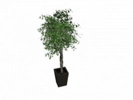 Potted tree with black pot 3d model