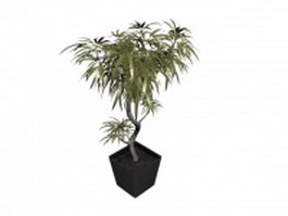 Miniascape potted tree 3d model