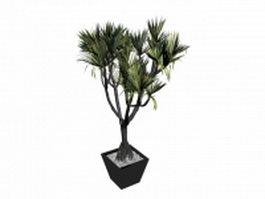 Bonsai potted hoop pine 3d model
