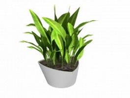 Potted cornstalk dracaena 3d model