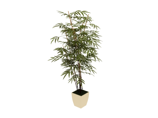Potted Bamboo Plant 3d Model 3dsmax Files Free Download