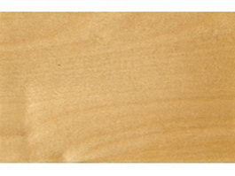 European white birch wood grain texture
