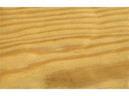 Knobcone pine wood grain texture