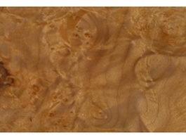Burma camphorwood burl texture