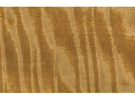 Moringa wood grain texture
