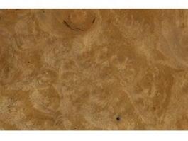 Burl woodgrain texture