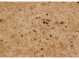 Brown antique paper with stains texture